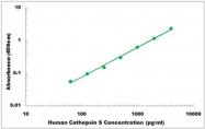 CEK1031 - Human Cathepsin S ELISA Kit