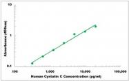 CEK1135 - Human Cystatin C ELISA Kit