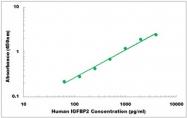 CEK1194 - Human IGFBP2 ELISA Kit
