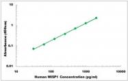 CEK1365 - Human WISP1 ELISA Kit