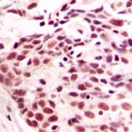CPA2849-100ul - Histone H4