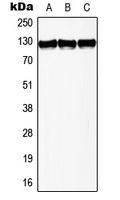CPA3022-100ul - TERT