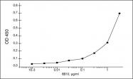 GTX10016 - Respiratory Syncytial Virus / RSV