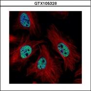 GTX105328 - CMAS