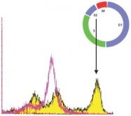 GTX10543 - Histone H3