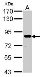 GTX107716 - VPS16