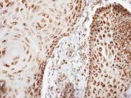 GTX108249 - Complex IV subunit VIb