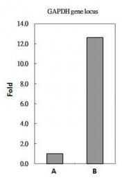 GTX108273 - Histone H2A.Z