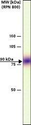 GTX10973 - CD309 / VEGFR-2 / Flk-1