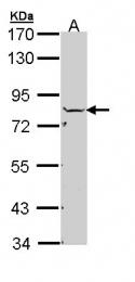 GTX110275 - NSF