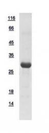 GTX110987-pro - Spindlin 2B / SPIN2B