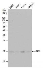 GTX111010 - FIS1 / TTC11