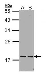 GTX112059 - PCNP