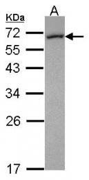 GTX114414 - FMO5