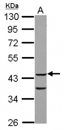 GTX115102 - COPS3