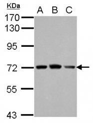 GTX115336 - FARSB