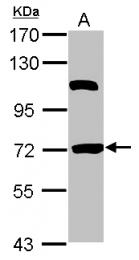 GTX116828 - HSPBAP1 / PASS1