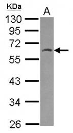 GTX116829 - HSPBAP1 / PASS1