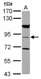 GTX117779 - RASEF