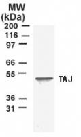 GTX12126 - TNFRSF19 / TRADE