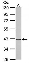 GTX122101 - WIPI-2