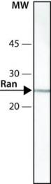 GTX13049 - RAN