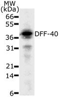 GTX13592 - CAD Protein