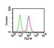 GTX13594 - RELA / NF-kB p65