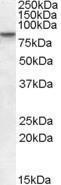 GTX13712 - SETDB2 / CLLD8