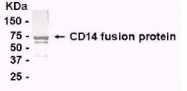 GTX14006 - CD14