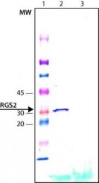 GTX14069 - RGS2