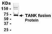 GTX14272 - TANK / ITRAF