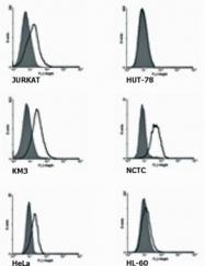 GTX14740 - TNFRSF21 / Death receptor 6 (DR6)