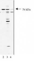 GTX16681 - NSF