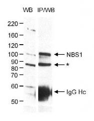 GTX16712 - Nibrin