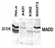 GTX22043 - MADD