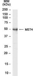 GTX22249 - MST4