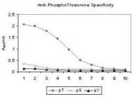 GTX22286 - Phosphothreonine