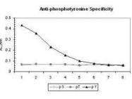 GTX22287 - Phosphotyrosine