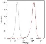 GTX22529 - CD105 / Endoglin