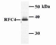 GTX23618 - RFC4 / RFC37