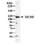 GTX24460 - MCM3