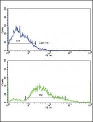 GTX25511 - CD140b / PDGFRB