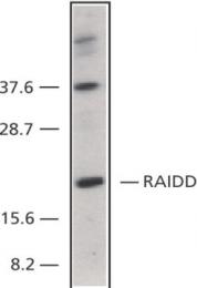 GTX28425 - RAIDD