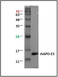 GTX29750 - Leptin