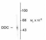 GTX30448 - AADC / DDC