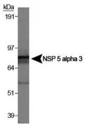 GTX30652 - NSP5