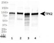 GTX30690 - TPX2 / DIL2