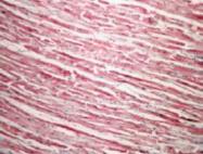 GTX41465 - Cytochrome c