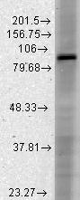 GTX41987 - HCN3